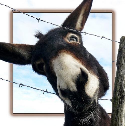 Charger la mule