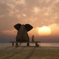 Comment réalisez vos GRANDS rêves grâce à la technique de l'éléphant