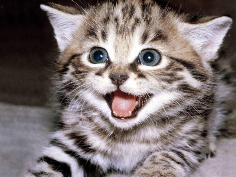 chat optimiste