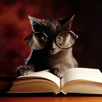 kitty reading a book