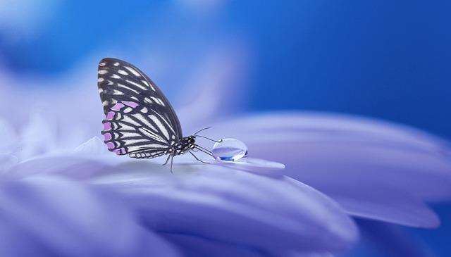 Métamorphose : Donnez du sens à votre vie